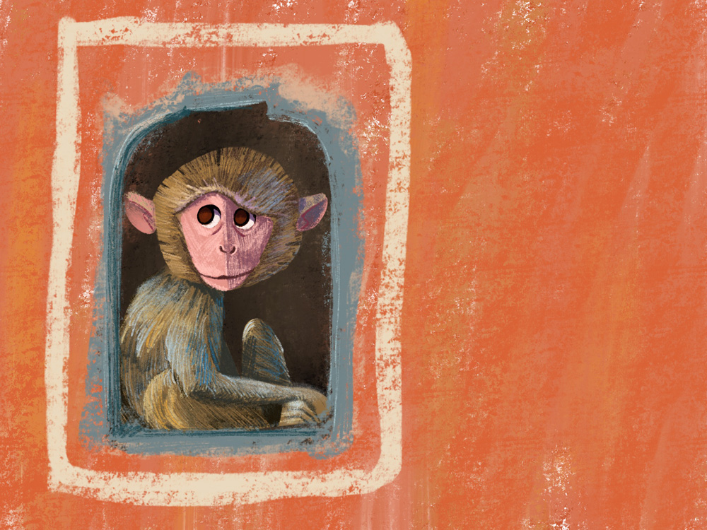 Jodhpur monkey website